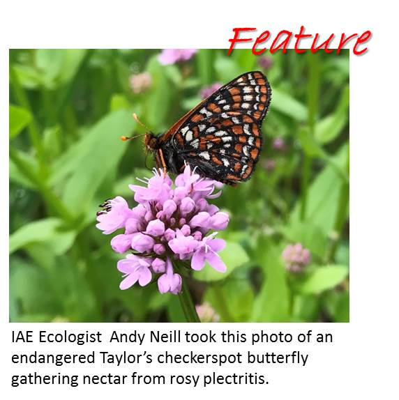 Feature checkerspot